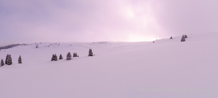 Snowy dawn