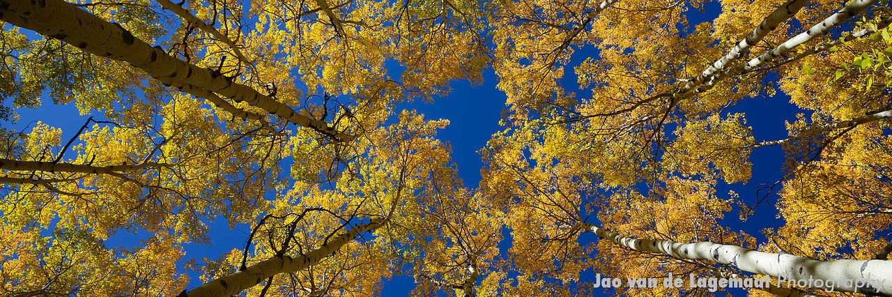 Aspen along Eaglesmere Lakes Trail